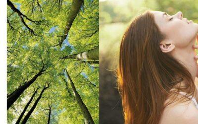 Arborescence, nouvelle collection de Green Skincare